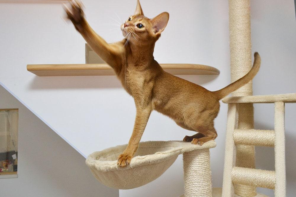 猫カフェ にゃーにゃーにゃーの画像2
