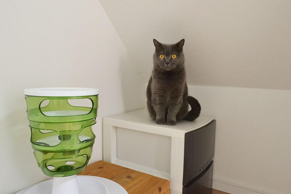 猫カフェ にゃーにゃーにゃーの画像3