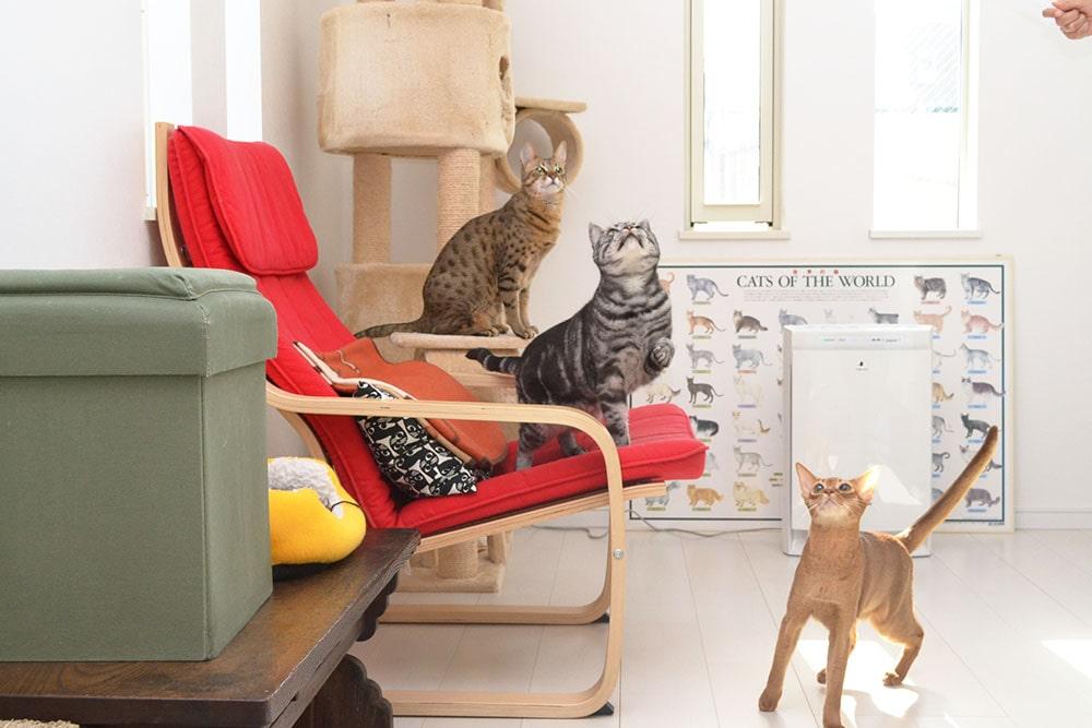 猫カフェ にゃーにゃーにゃーの画像4